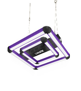 WEEDS WEEDBLOOM - 500 mL